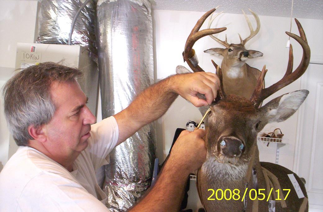 Osceola Taxidermy - Turkey Mounts, Deer Mounts, All Game Mounts